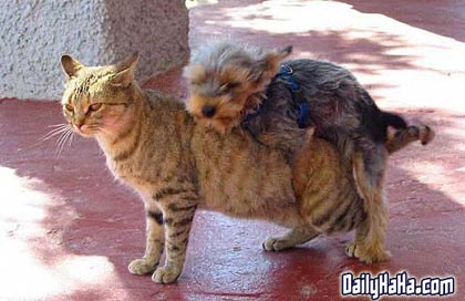 No.... I didn't get humped by a teeny dog, but when Googling for an ...