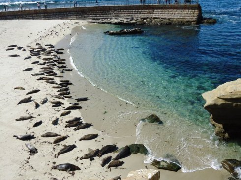 La Jolla Shores, and the seal colony